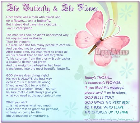 The Butterfly And The     | KindSpring org